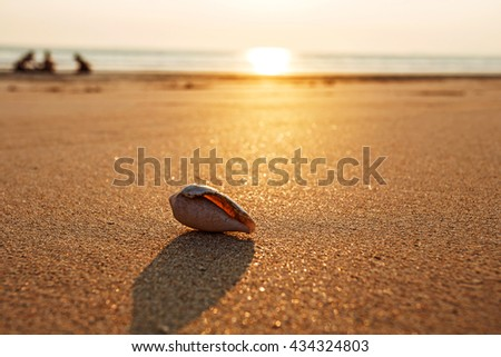 shell on white sand beach with golden sand on sunset,summer holiday concept. - stock photo