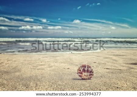 Shell, vintage style photo - stock photo