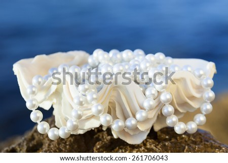 shell with white pearls, selective focus - stock photo
