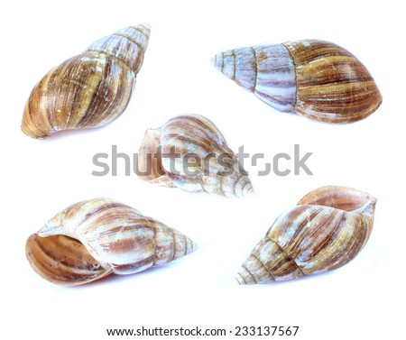 Shellfish set isolate on a white background - stock photo