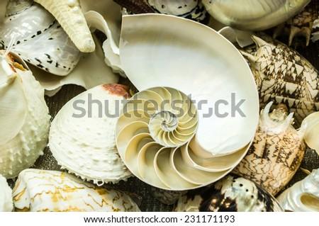 shells - stock photo