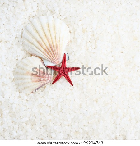 Shells and sea star over the aromatic salt composition - stock photo