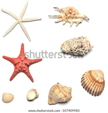 shells and starfishes collections isolated on white background - stock photo