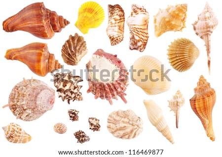 Shells collection isolated on white background - stock photo