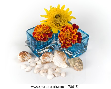 shells, flowers in glass on white background - stock photo
