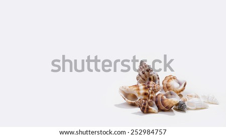 Shells isolated on the white background - stock photo