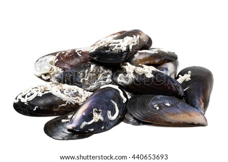 Shells of mussels isolated on white background - stock photo