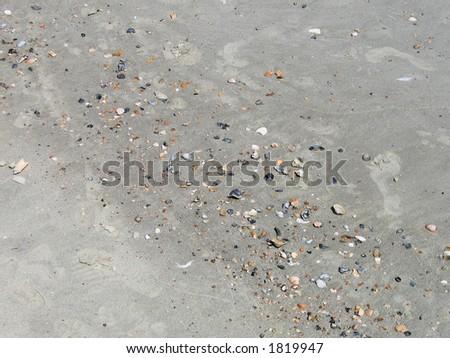 Shells on Beach - stock photo