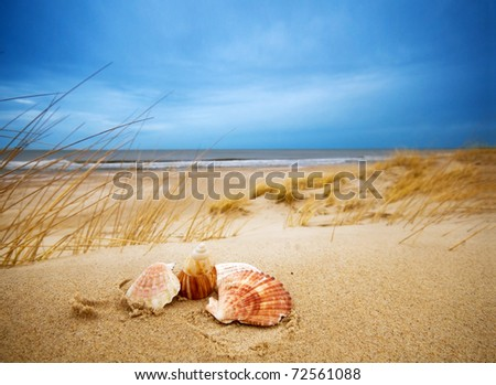 Shells on sand. Ocean in the background - stock photo