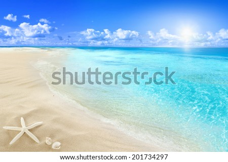 Shells on sunny beach - stock photo