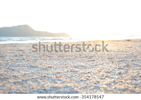 Shells or Conch on sand beach in the morning. - stock photo