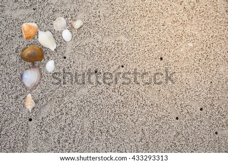 Shells sea on the sand for background. - stock photo