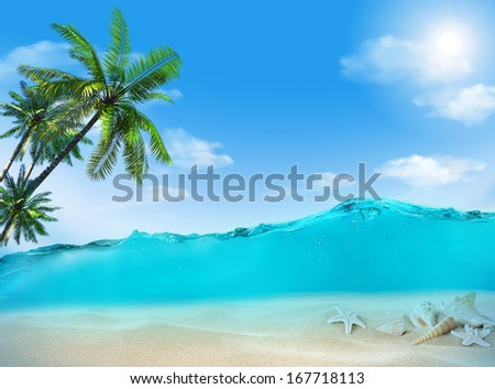 Shells under water. - stock photo