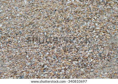 Shelly seashore. Background from cockleshells and sand. - stock photo