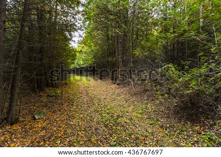 sheltered forest pathway - stock photo