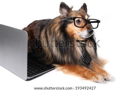 Sheltie or Shetland Sheepdog wearing a tie and geeky glasses laying by a computer laptop, working at the office concept - stock photo