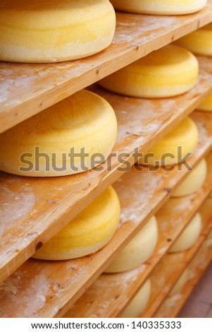 Shelves filled with traditional cheese-wheelsShelves filled with many traditional cheese-wheels at the cheesemaker shop - stock photo