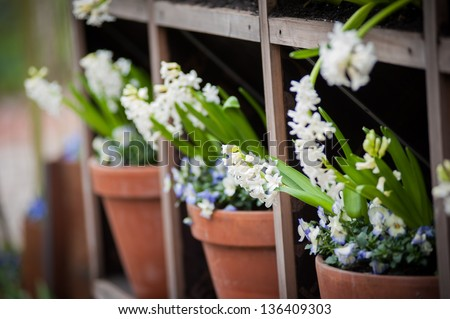Shelves with pots of flowers - stock photo