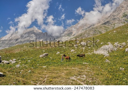 Shepherd with horse and bull in scenic mountain range in Kyrgyzstan - stock photo