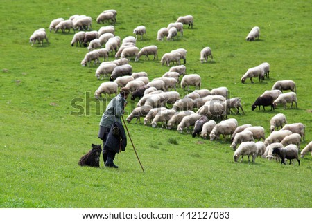 Shepherd with sheep herd - stock photo