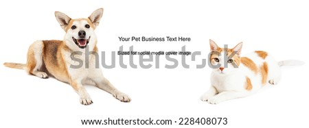 Shiba Inu mixed breed dog and domestic shorthair cat. Image cropped to the size of a social media timeline cover placeholder - stock photo