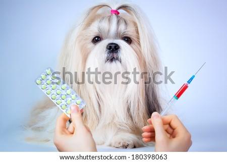 Shih tzu dog treatment. Focus on dog. - stock photo