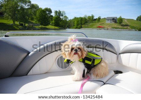 Shih Tzu Puppy In A Life Vest while riding in a boat on a small lake. - stock photo