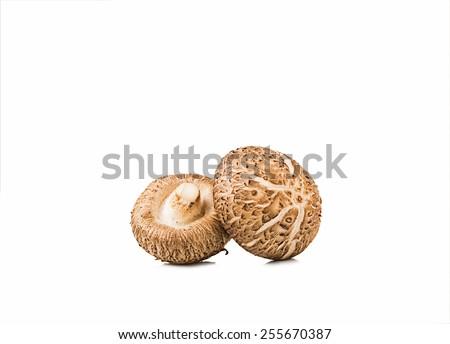 Shiitake Mushrooms isolated on white background - stock photo