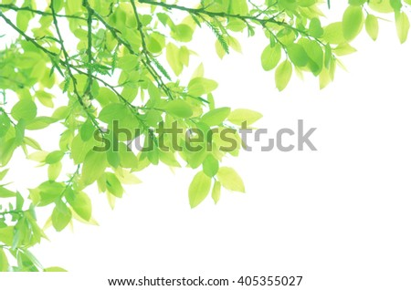 Shining Fresh Green Leaves Close Up - stock photo