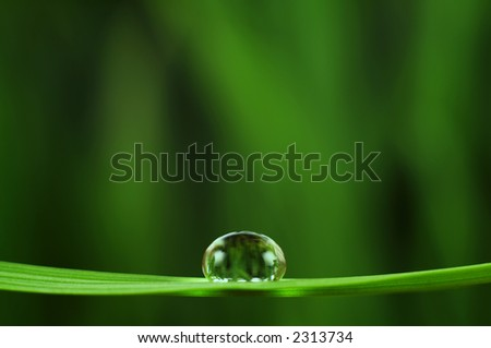 Shiny rain drop on grass closeup (space for text) - stock photo