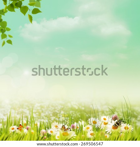 Shiny summer day on the meadow, natural backgrounds - stock photo