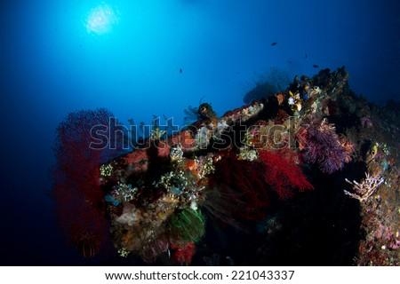 Ship werck Cora-Rreef Indonesia - stock photo