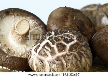 shitake mushrooms - stock photo