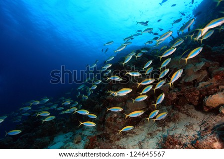 Shoal of fish in the coral reef - stock photo