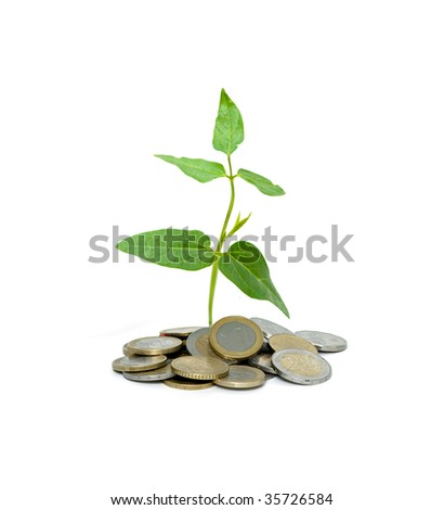 Shoot growing from pile of coins - stock photo