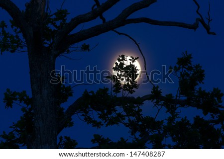 Shoot of black oak Leaves Silhouetted Against Blue Evening Sky and Full Moon - stock photo
