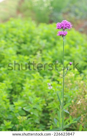 shoot of the purple flower on the green background - stock photo