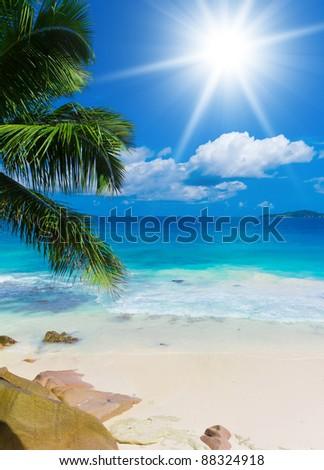 Shore Palms Divine Seascape - stock photo