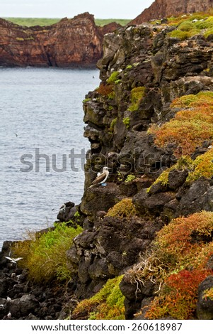 Shore view of volcanic islands in the Galapagos, Ecuador - stock photo