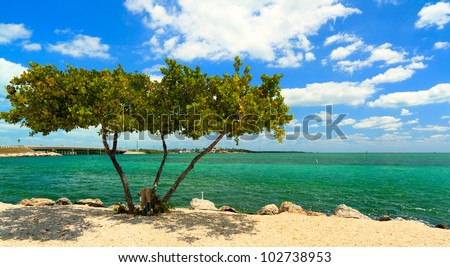 Shoreline of the Florida Keys with pretty blue sky and clouds. - stock photo