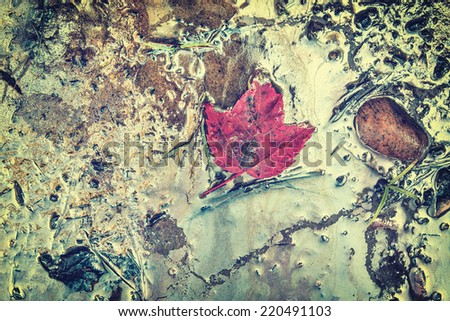 Shoreline where hazardous toxic chemical oil and gasoline waste have washed ashore.  A red maple leaf, an icon of Canada, floats in the contaminate.  Filtered for a retro, vintage look. - stock photo