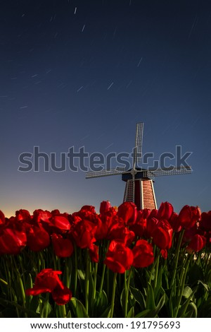 short star trail over a clear sky in Oregon with a wooden windmill and fresh april tulips in the bottom of the frame - stock photo