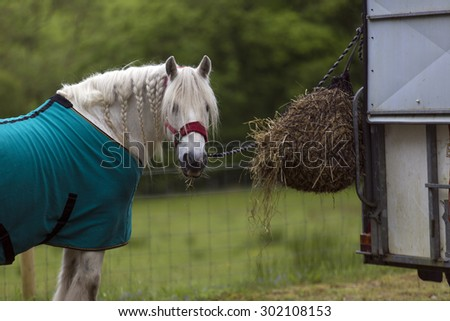 Shot of a White Horse eating Hay - stock photo