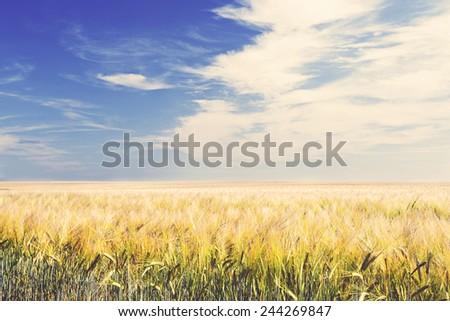 Shot of an Arable Field under Blue Sky - stock photo