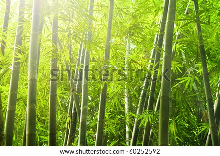 shot of bamboo forest with ray of lights - stock photo