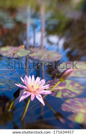 Shot with lensbaby 'sweet 35' optic with the sweet spot on the waterlily.  The beautiful bokeh created by the lens adds a  Monet-esque  painterly effect to the image. - stock photo