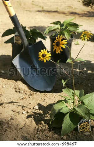 Shovel and Plants on landscaping day - stock photo