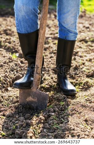 Shoveling in the garden - stock photo