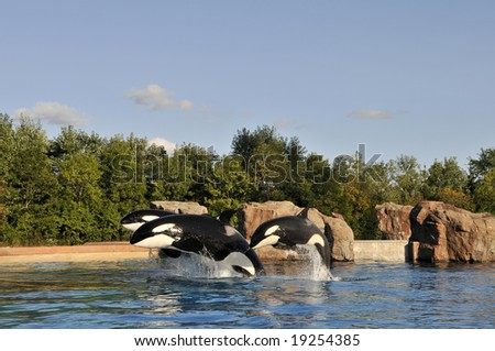 Showing blue whales in the Oceanarium in Canada - stock photo