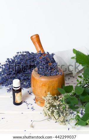 shredding medicinal herbs lavender in a mortar - stock photo